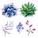 水彩花卉和叶子