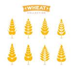 金色小麦设计