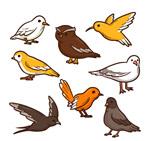 彩色鸟类设计