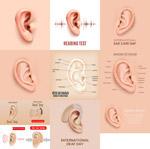 耳部结构解剖图