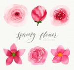 春季粉色花卉