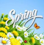 春季菊花和蝴蝶