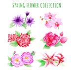 彩绘春季花卉