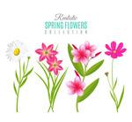 春季花卉矢量