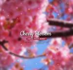 粉色盛开樱花树