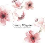 水彩绘樱花花朵