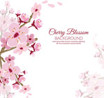 粉色樱花花枝