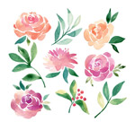 水彩绘花卉和叶子