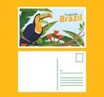 巴西巨嘴鸟明信片