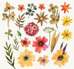 水彩�L花卉和�~子
