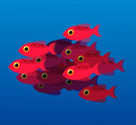 红色鱼群设计