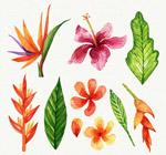彩绘热带花朵和叶子