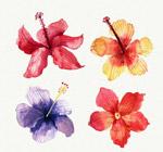 水彩绘热带花朵
