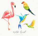4款水彩绘鸟类