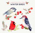 水彩绘冬季小鸟