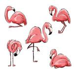 手绘粉色火烈鸟