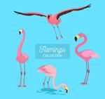4款粉色火烈鸟