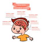 男孩大脑运作信息图