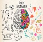 左右脑功能信息图