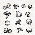 手绘蘑菇设计
