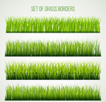 绿色茂盛草丛