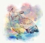 水彩绘背景猫头鹰
