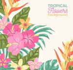 热带花卉矢量