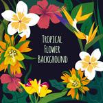 彩绘热带花卉边框