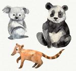水彩绘野生动物