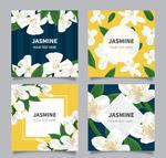 白色茉莉花卡片