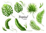 绿色热带植物树叶