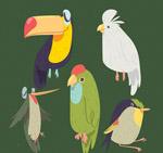 手绘鸟类设计
