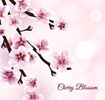 美丽盛开樱花花枝
