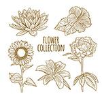 手绘花卉设计