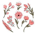 手绘粉色花卉