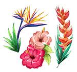 水彩绘热带花卉