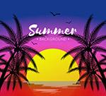 夏季夕阳下的棕榈树