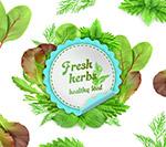 蔬菜和香草框架