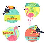 彩色夏季鸟类标签