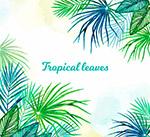 热带树叶框架