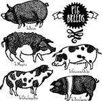 手绘黑白花纹猪