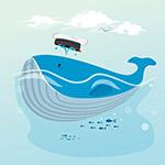 浮在海面的鲸鱼