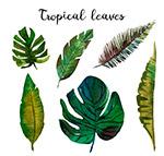 彩绘热带树叶矢量