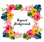 热带花卉树叶框架