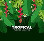 美丽热带花卉树叶