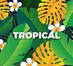 彩色热带花卉树叶