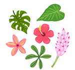 彩色花卉树叶
