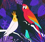 彩色热带树林鸟类