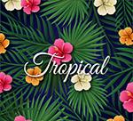 棕榈树叶和扶桑花