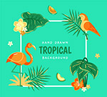 彩色热带花鸟背景
